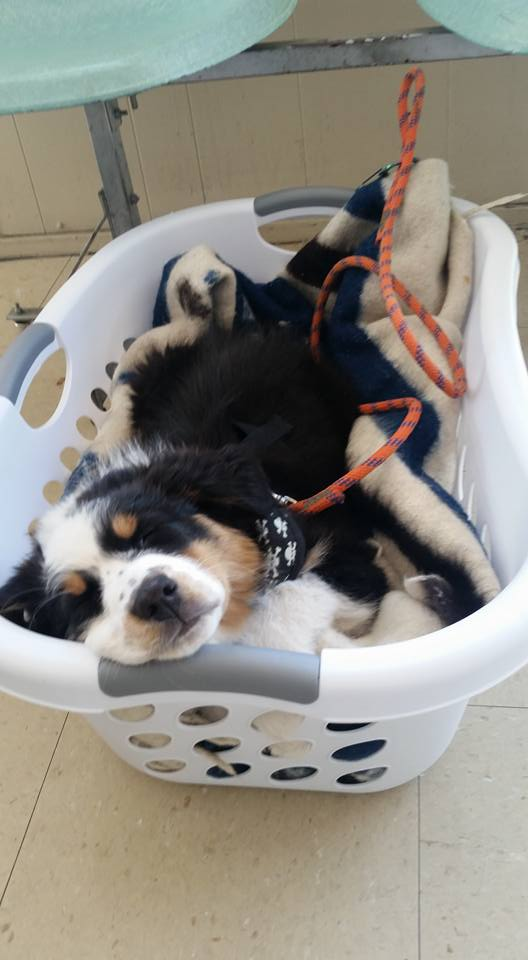 Wish basket