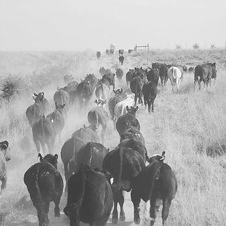 Ranching = Monday —_ Sunday #ranchlife