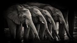 Elephant-Mai-2018
