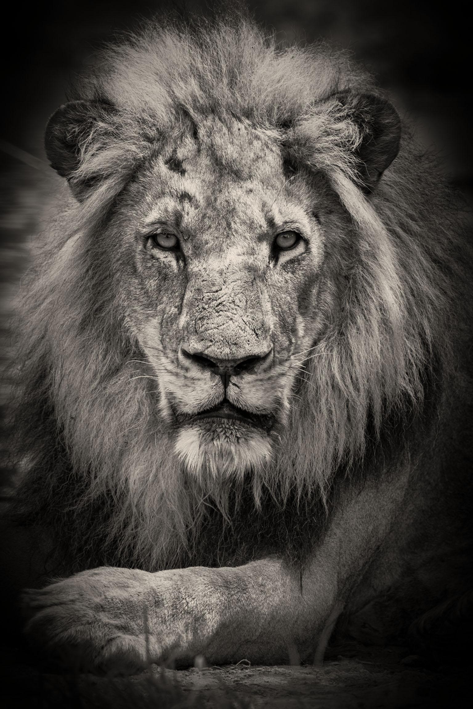 Lion-Okavango-0317