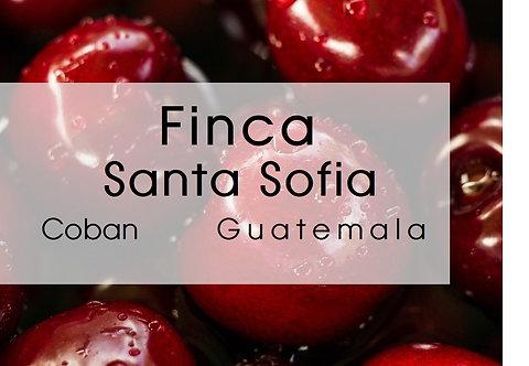 Guatemala l Finca Santa Sofia l Coban l Washed