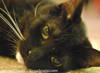 R.I.P. Sam the Cat