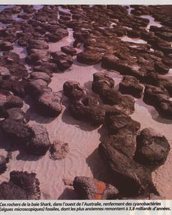 Stromatolites Shark bay