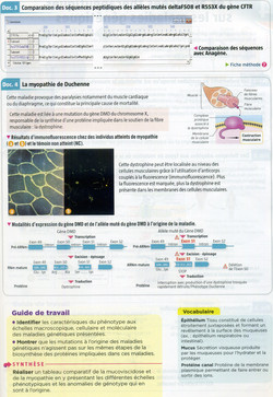 Activité 2 Mucoviscidose (2)