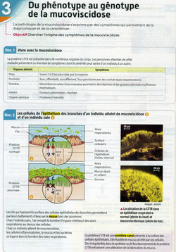 Activité 2 Mucoviscidose (1)
