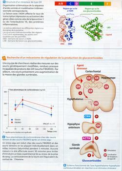 Activité 2 Stress résilience (2)