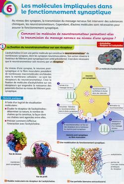 Activité 3 bis neurotransmetteur (1)
