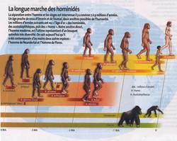 Hominidés évolution