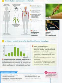 Activité 10 Paludisme (2)