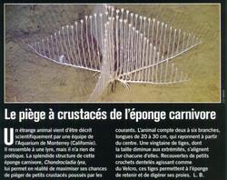 Eponge carnivore