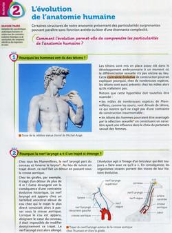 Activité 4 L'évolution de l'anatomie hum