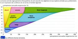 Biomes terrestres