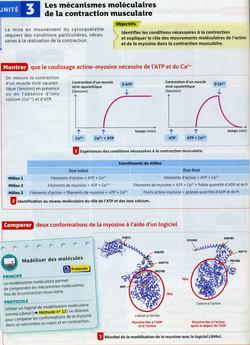 Activité 6 mécanismes contraction (1)