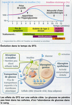 Effet DT2 sur cellule cible