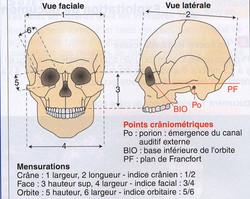 Mesures craniennes