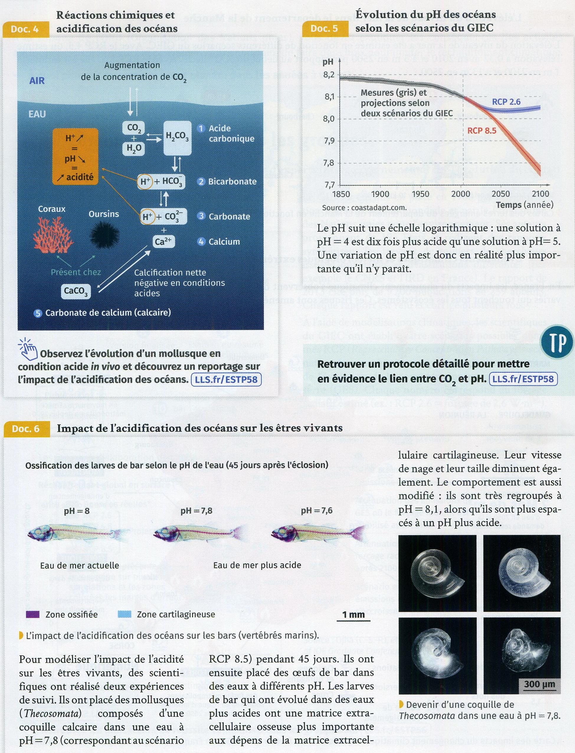 Acidification océan conséquences