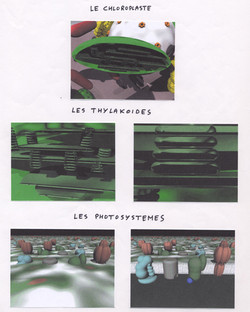 Structure du chloroplaste