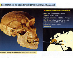 Homo néenderthalensis