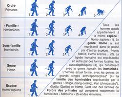 Homo sapiens classification