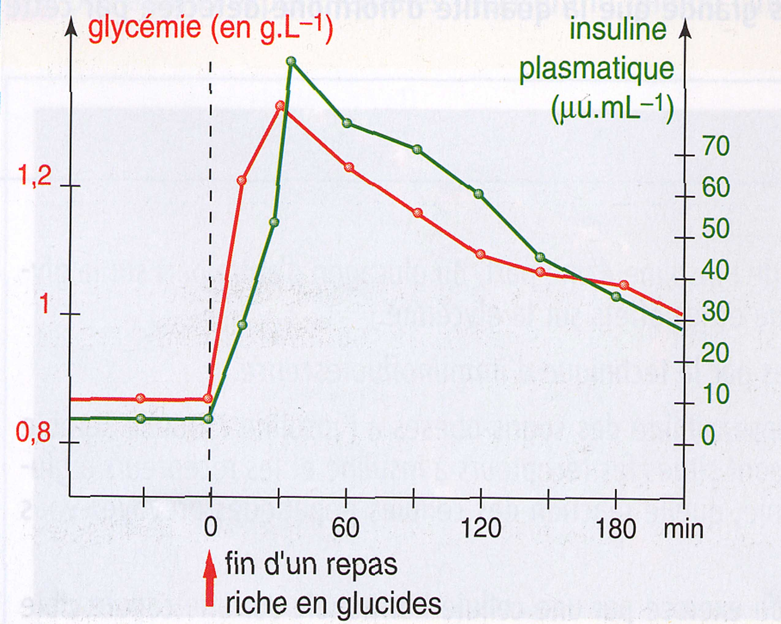 Insuline post-prandial