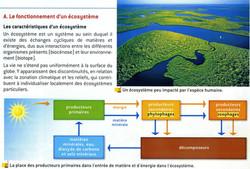 Ecosystème schéma synthétique
