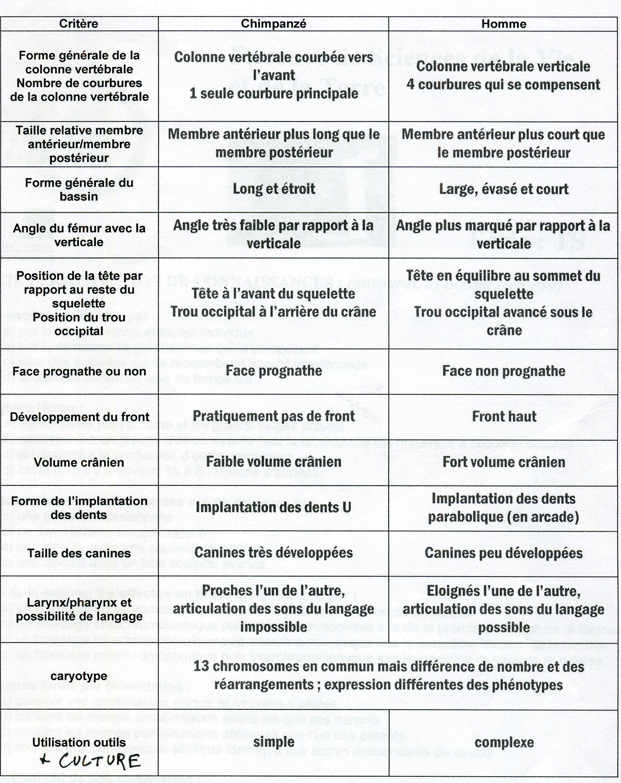 Homo vs Pan