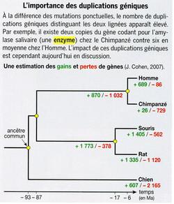 Importance des duplications géniques