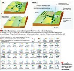 Biodiversité et gestion de l'homme
