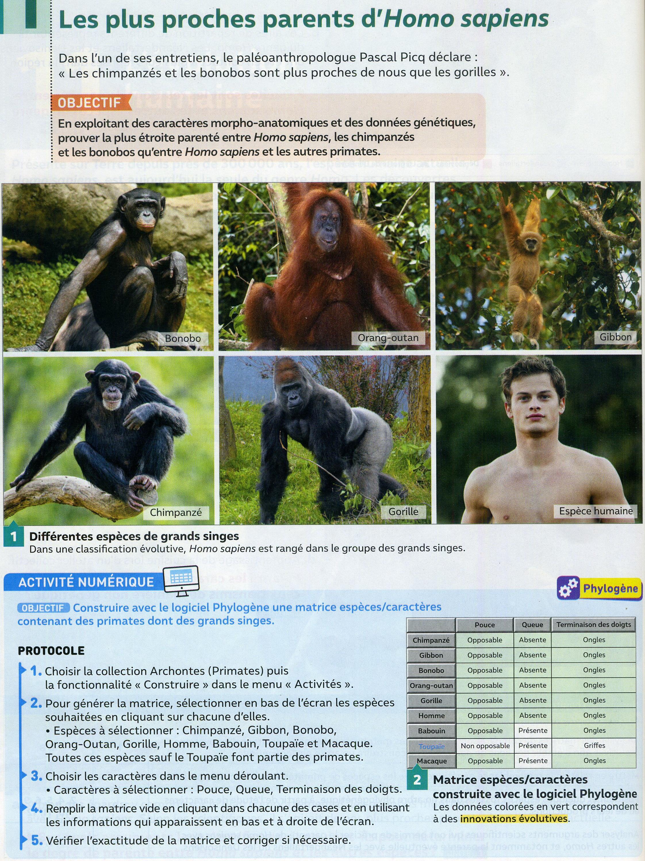 Activité 7 parents d'homo sapiens (1)