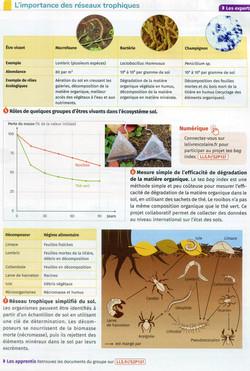 Activité 4 Biodiversité du sol et rôles