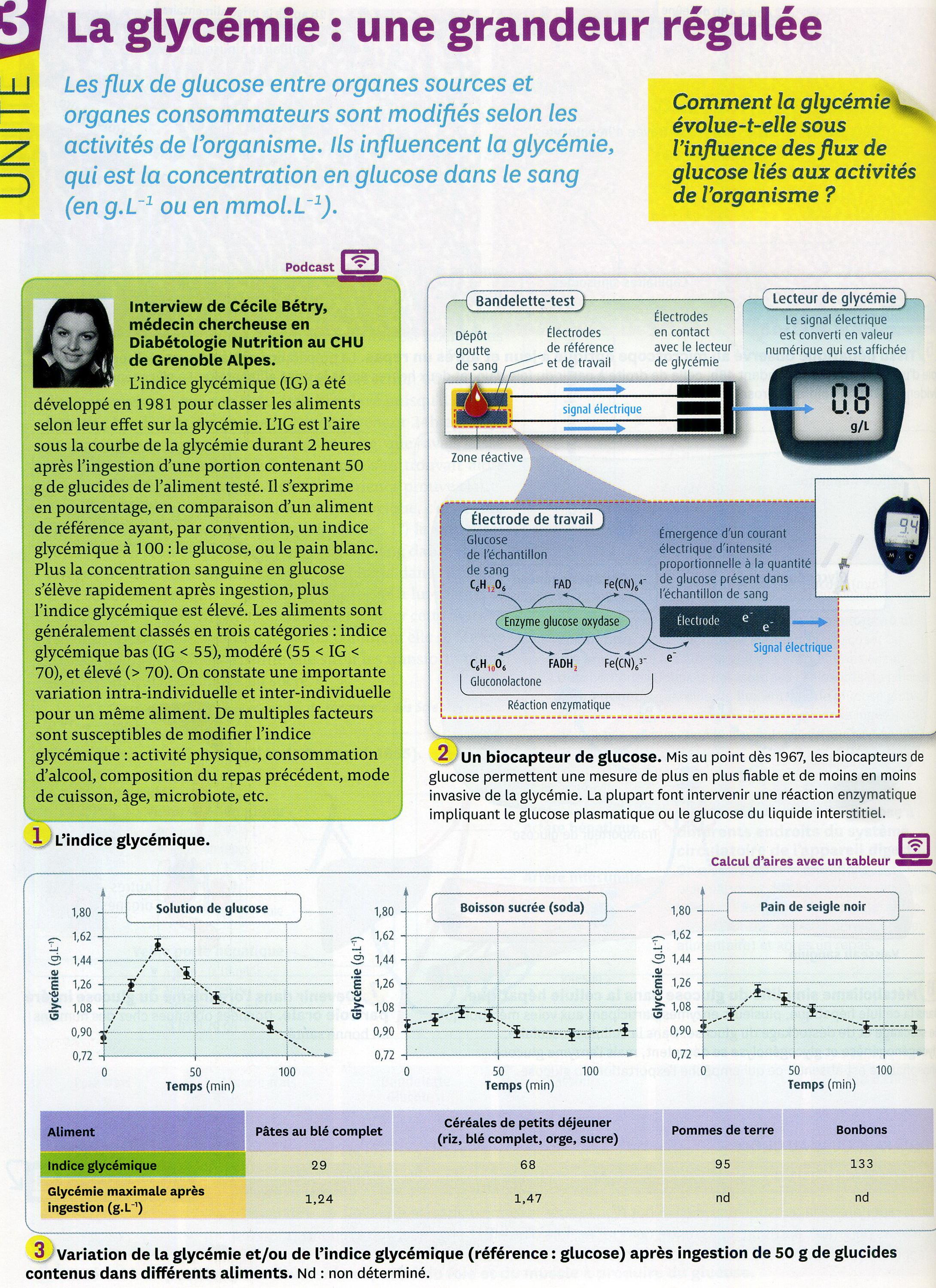 Activité 1 Glycémie régulationGlycémie