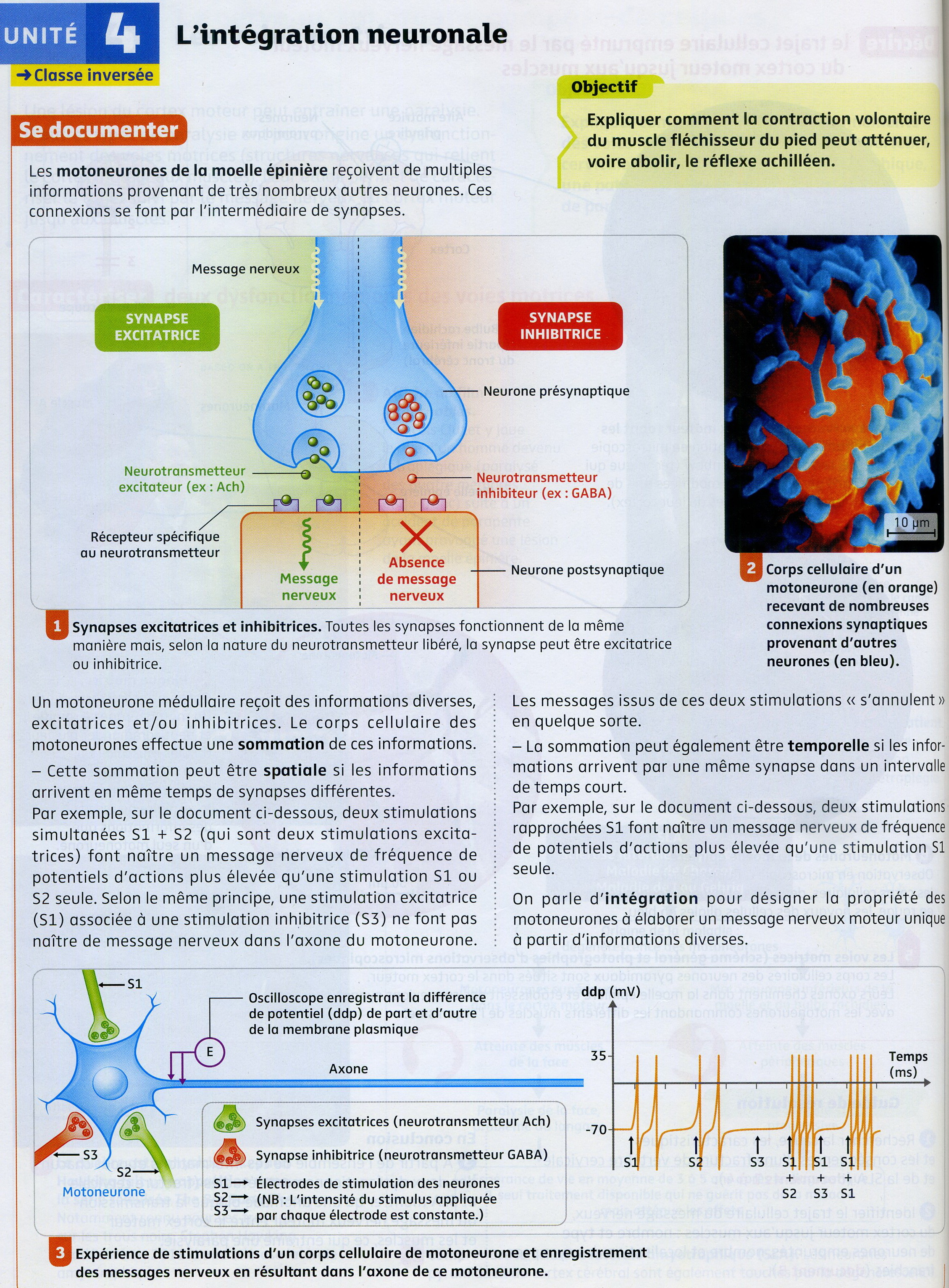 Activité 7 intégration neuronale (1)