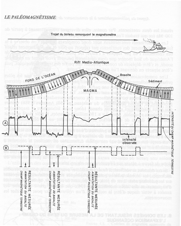 Inversion polarité et dorsale