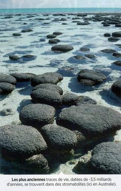 Stromatolite Australie