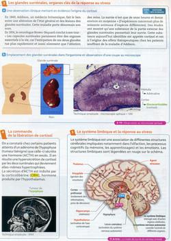 Activité 1 Réponse stress aigu (2)