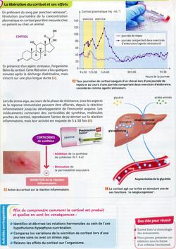 Activité 6 stress cortisol (2)