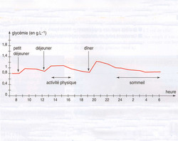 Variation glycémie journalière