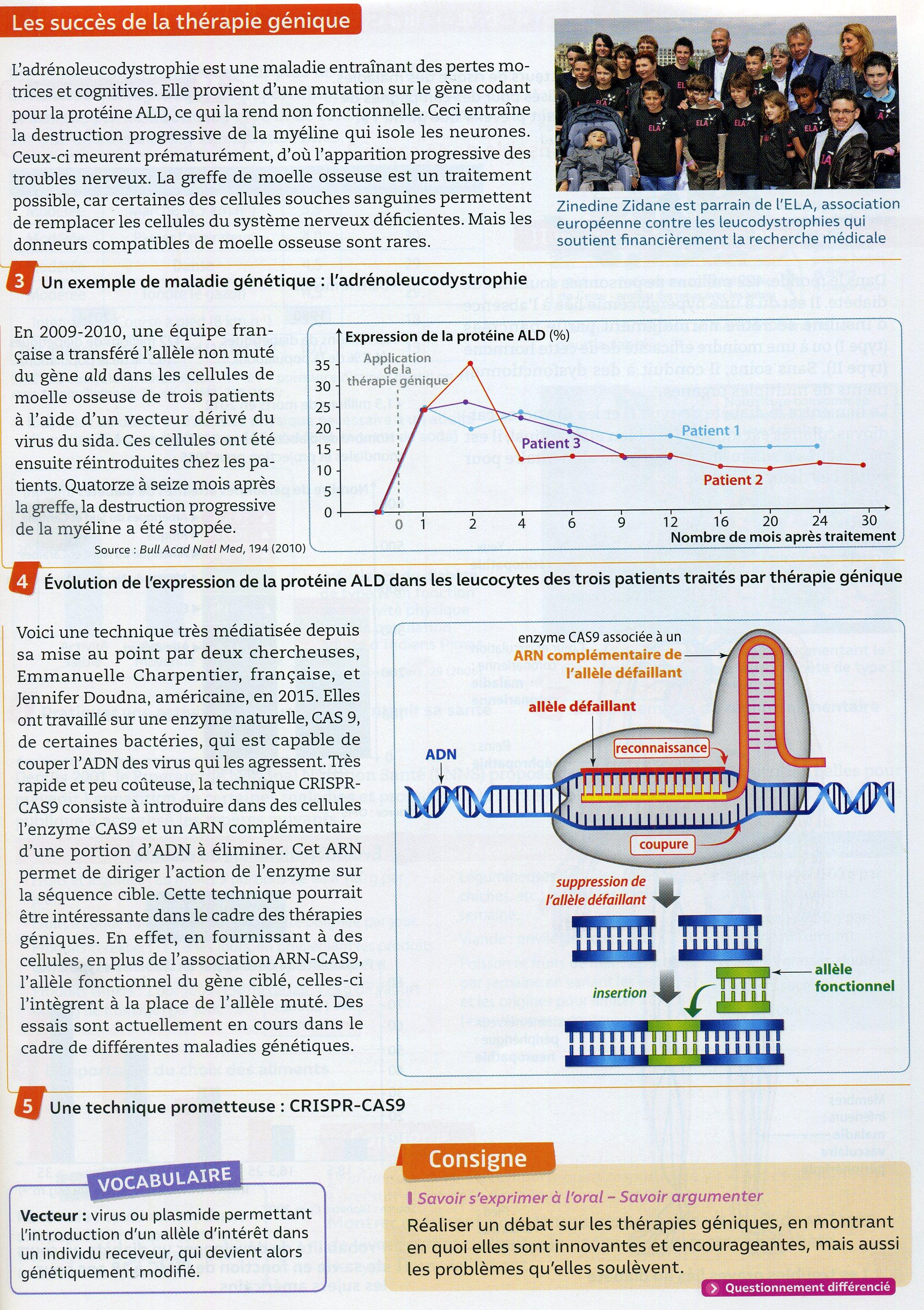 Cancer thérapie génique (2)