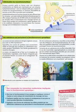 Activité 3 bis neurotransmetteur (2)