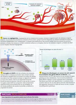 Cancer et mutations (2)