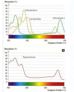 Spectre d'absorption