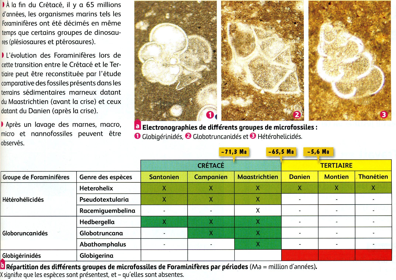 Evolution des foraminifères