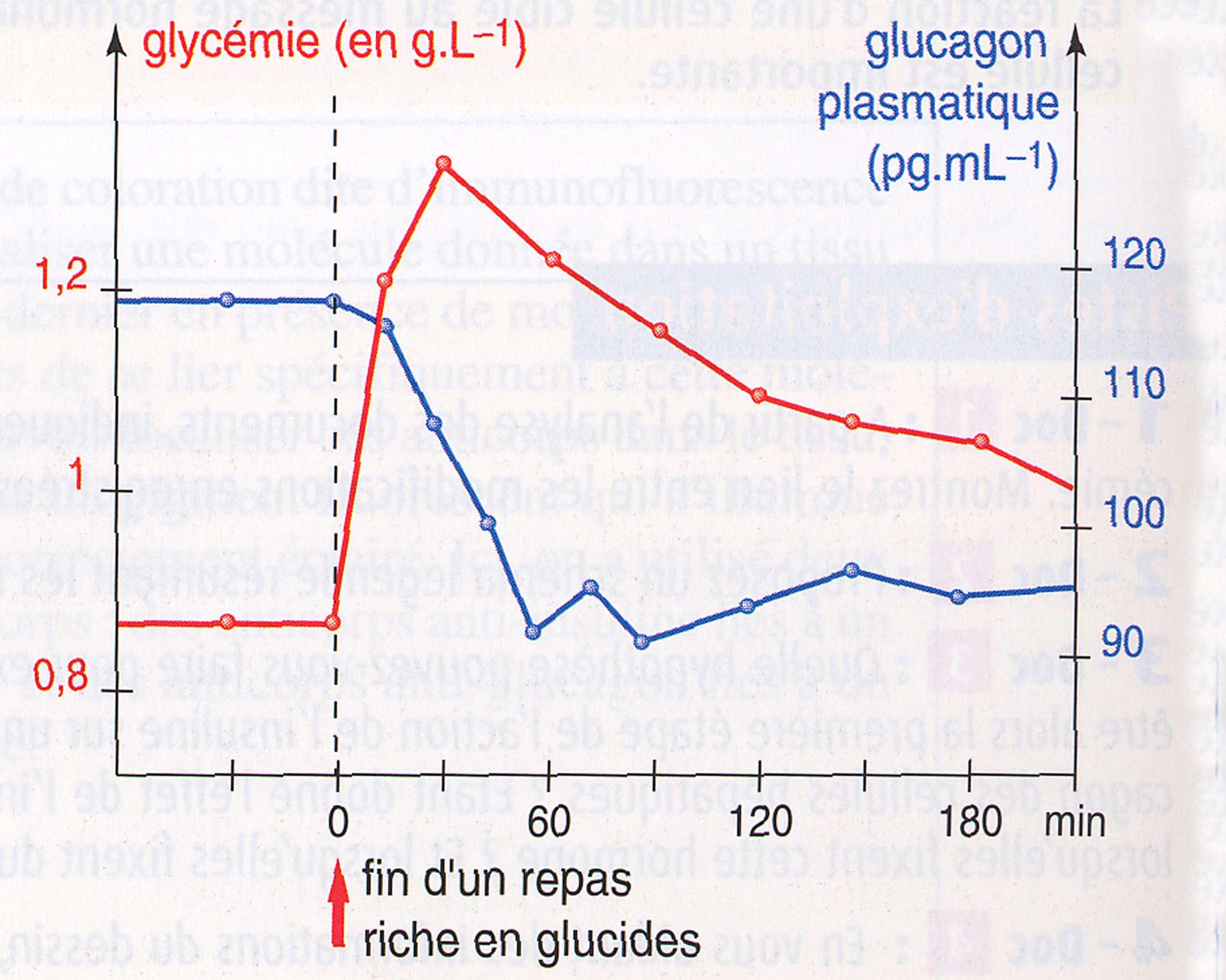 Glucagon post-prandial