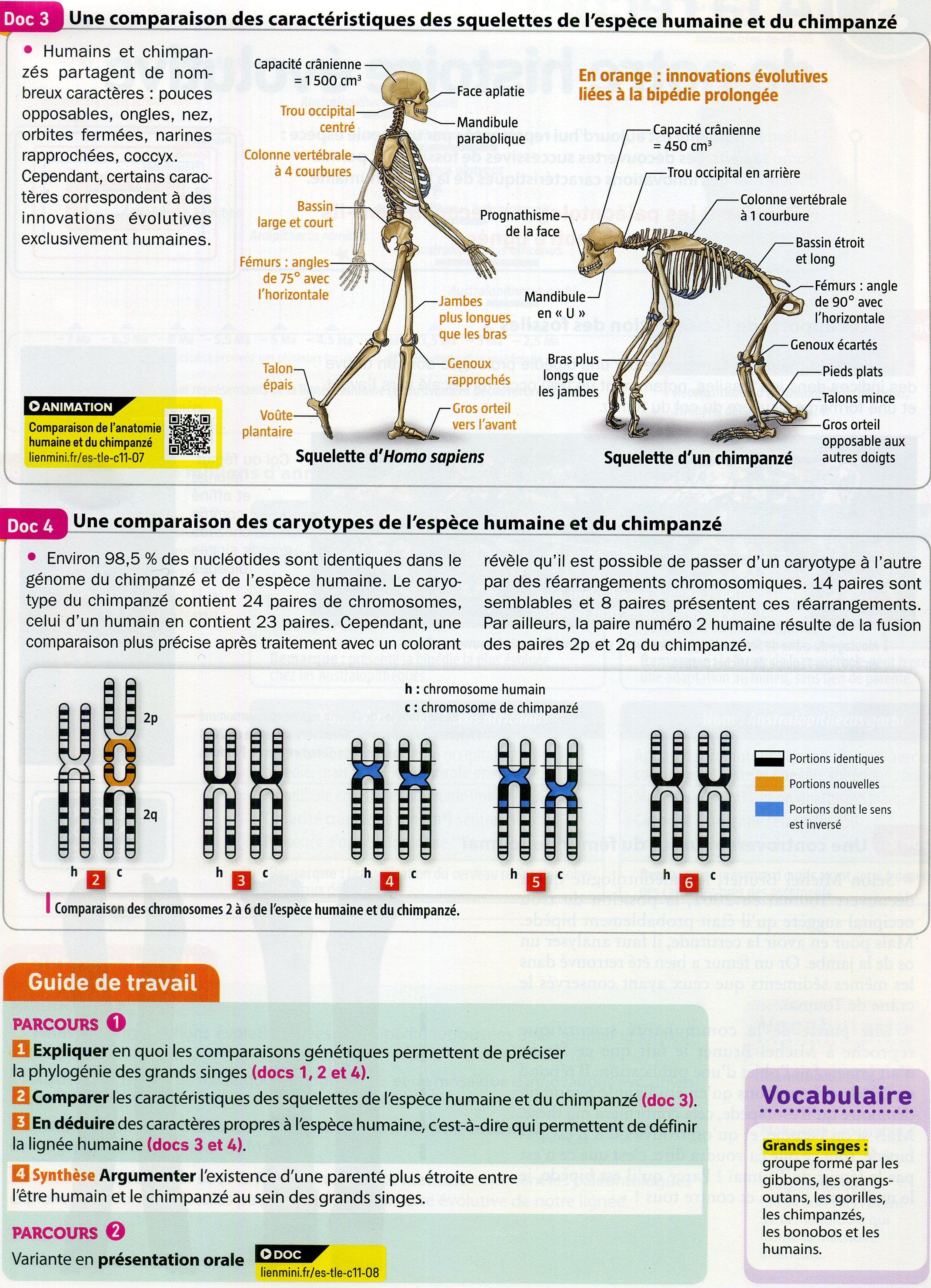 Activité 8 primates parenté génétique (2