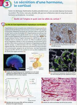 Activité 6 stress cortisol (1)