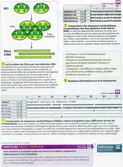 Activité 1 Drépanocytose (2)