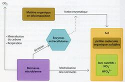 Role des bactéries sur le recyclage