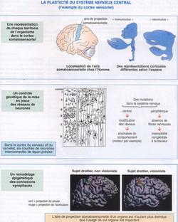 Plasticité cérébrale bilan