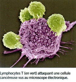 Lymphocyte_T_et_cellule_cancéreuse