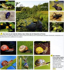 Biodiversité actuelle